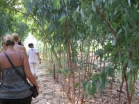 Walking to a village on the Mekong.