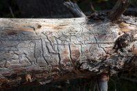 Natural hieroglyphs.