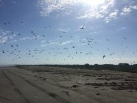 Attack of the birds.