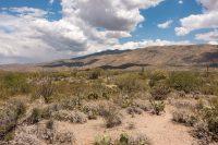 Field of saguaros!