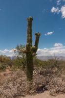 Epic first up-close saguaro encounter.
