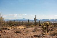 One of my favorite saguaro photos.