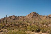 Another favorite saguaro photo.