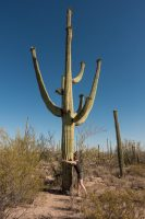 Saguaro hugs. Saguaro love.