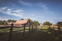 The private approach to the pastures with the barn and family home in the background.
