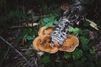 Enormous mushroom at Lyman Run State Park.