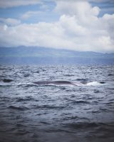 Whale watching with Sea Color Expeditions was amazing. We saw fin whales, blue whales, and dolphins!