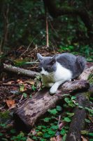 You may have a hiking partner on the Caldeirão Verde hike.