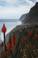 These lovely flowers cover hillsides and make for a lovely addition to a coastline photo.