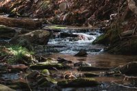 In warmer months this stream on the property of Camp Haven can be used for bathing.