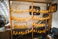 """A """"banana tree"""". The Camp Haven hosts are primarily fruitarians."""