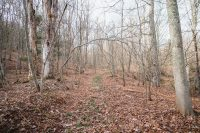 Spend time walking through the wooded area.