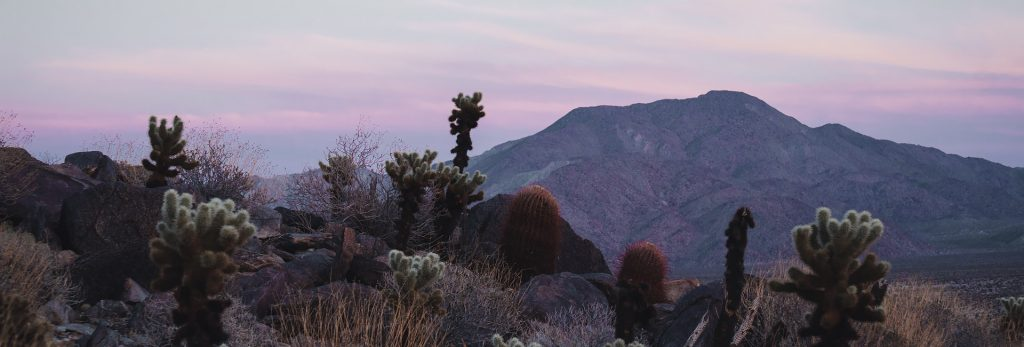 Best Short Hikes in Anza-Borrego Desert State Park