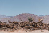 Galleta Meadows, Borrego Springs, California
