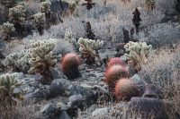 Cactus Loop Trail, Anza-Borrego Desert State Park, California