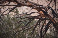 Yaqui Well Trail, Anza-Borrego Desert State Park, California