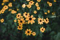 Flowers in Robert H. Treman State Park.