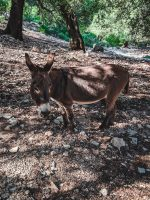 We saw a donkey on the way back from Cala Golortitze