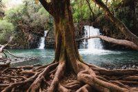 Twin Falls, Road to Hana, Maui