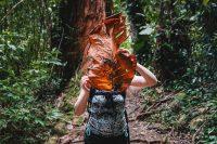 Waikamoi Nature Trail, Road to Hana, Maui