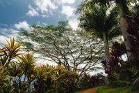 Garden of Eden, Road to Hana, Maui