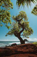 Koki Beach Park, Road to Hana, Maui