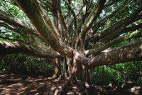 Pīpīwai Trail, Haleakalā National Park, Maui