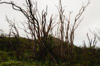 Waihe'e Ridge Trail, Maui