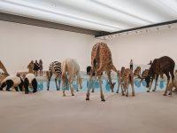 Gallery of Modern Art, Brisbane