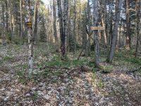 Trail to Peavine Swamp Loop 3 Campsite