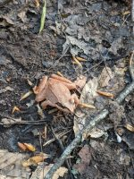 Tree frog!